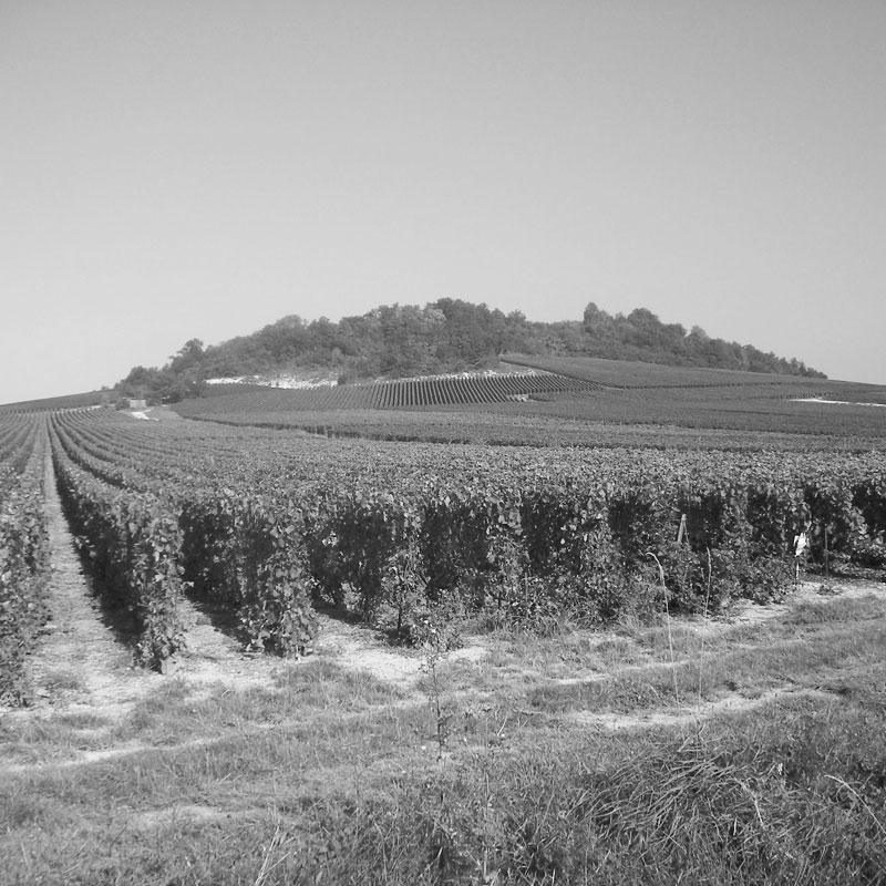 petit-le-brun-et-fils-campi-champagne