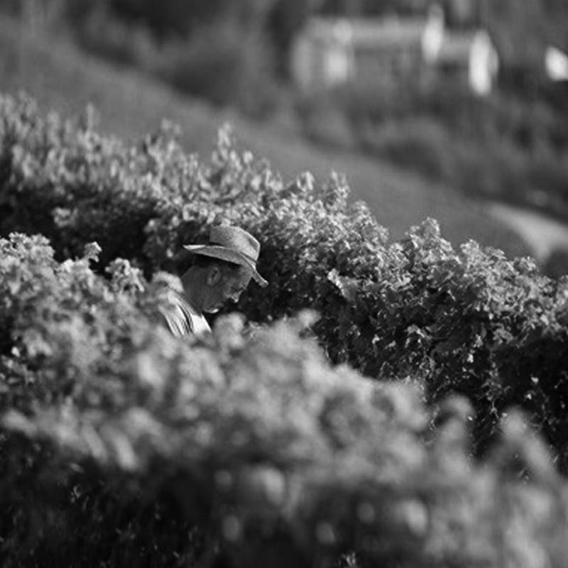 chiccheri-tenuta-agricola